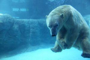 urso aquario de sp.20minutospratudo